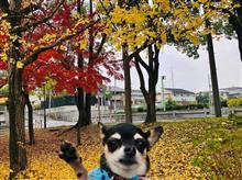 ワンコとお出掛け〜ご近所公園へ散歩