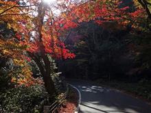 滋賀県道25号彦根近江八幡線