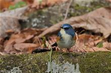 青い鳥に会いに、近隣公園へ!!