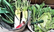野菜は助かってます。