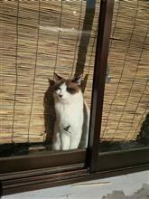 日向ぼっこする猫・・・