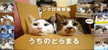 可愛いシンクロする猫姉妹の写真集買いました(ФωФ)