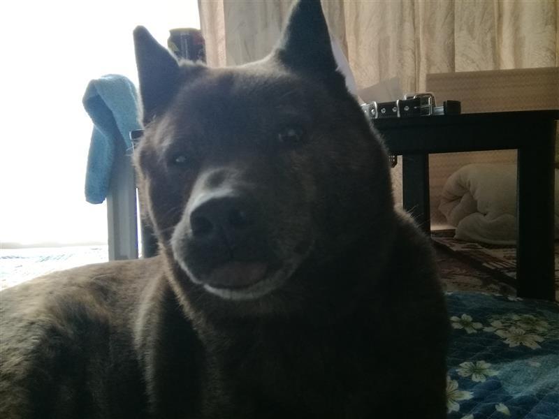 甲斐 犬 ブログ
