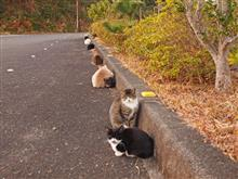 徳島県美波町山河内(南阿波サンライン第一展望台)