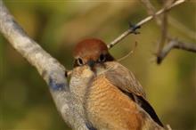 SS公園で身近な鳥さん達に遊んでもらう (^-^;