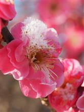 逆境の中で咲く花は