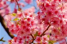 みなみの桜(*^^*)