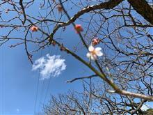 お天気は、最高!・・お礼参りに・・(。◠‿◠。)♡