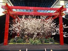 Visited Japan.