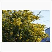 幸福の黄色い・・・ ~ mi ...