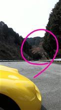 桜のトンネルまでもう一歩【ZZ】