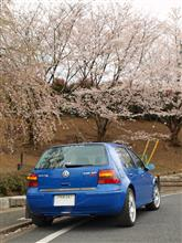 夕方は~曇天でしたが青機と桜