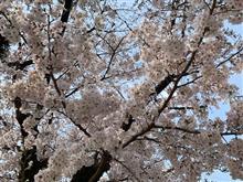 春が、来てます・・(^.^)