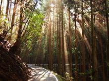 杉林の道は同じようで困ります