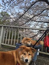 春の訪れ・・・寒かったり暖かかったり落ち着かん(笑)