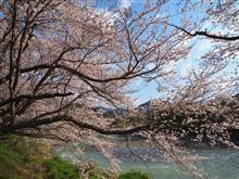 桜の写真のお気に入りはこれ