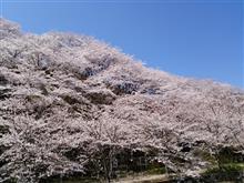 隠れた桜の名所