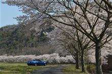 告知、4月7日、上郡でお花見しましょう