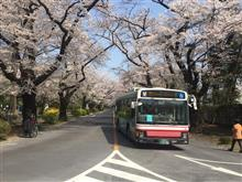 ICUで桜鑑賞