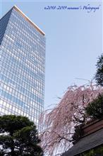 西新宿 成子の常圓寺