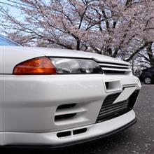 続 桜 R32 2019