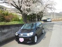 桜とUP!のツーショット😉