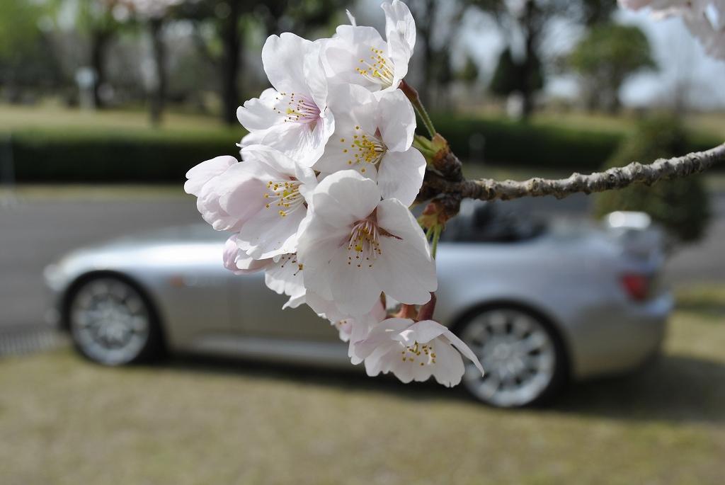 2019年、桜をバックに愛機S!