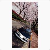 桜満開パート2