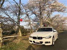 桜を見ながら思った事