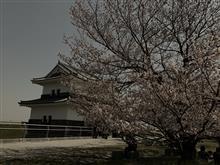 戦コペ 花見2019 at KUWANA  MIE pref.