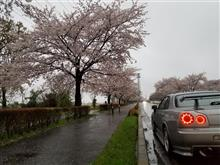 昨日、お花見、激寒かった…