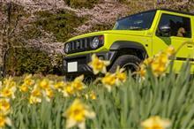 春のキネティックイエロー🤗
