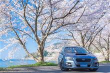 湖北の桜2019