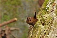 神奈川の林道に探鳥