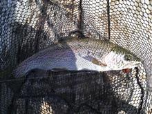 今期2回目の釣り