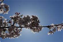 春満開!!