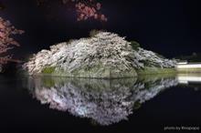 彦根城リフレクションは簡単には撮らせてもらえなかった