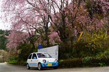 桜が散った?なら、咲いている所へ行けば良い!2019年バージョン。