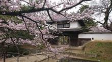 [車載動画]桜満開の乙戸沼公園と土浦城