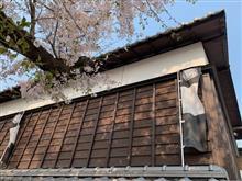 平成最後の桜・・お城の跡・・④