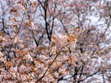 西武新宿線沿線(武蔵関〜東伏見)散歩