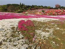 「松本ツツジ園」 長崎県大村市