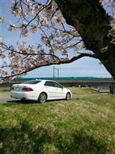 桜の満開前線を追いかけて
