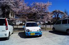 桜前線捕獲大作戦。桜吹雪を駆け抜けろ!~その2~