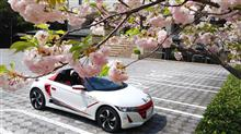 伊勢市内の八重桜とシャクナゲ 鳥羽の海の博物館