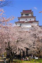 桜を求めて…'19