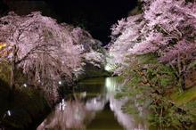 上田城跡公園まで夜桜散歩