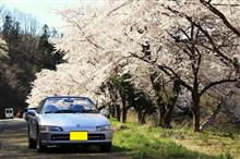 桜を求めての山形ドライブ