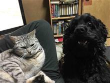 """犬と猫の居る風景・・・ 相変わらずミーコが大好きな""""坊(仮名)""""♪"""