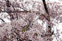春の花散歩(その1)
